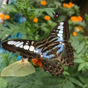 butterfly-garden-view